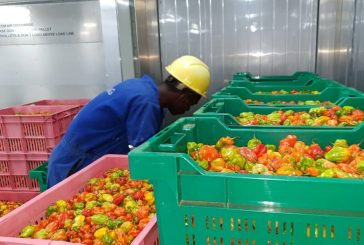 DP World Kigali opens Rwanda's first fully-fledged cold storage